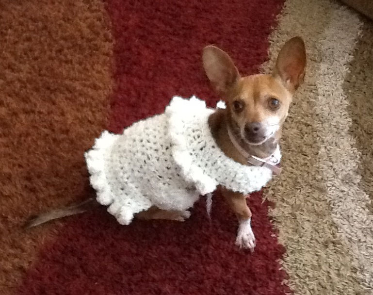 Dog Sweater - Missy