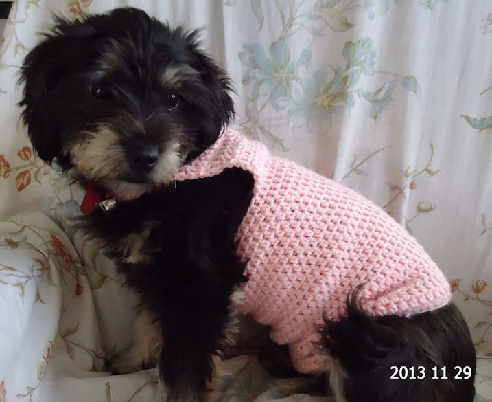 Crocheted Dog Sweaters, Crocheted clothes for dogs