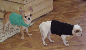 Easy Dog Sweater Free Crochet Pattern Free Crochet Pattern