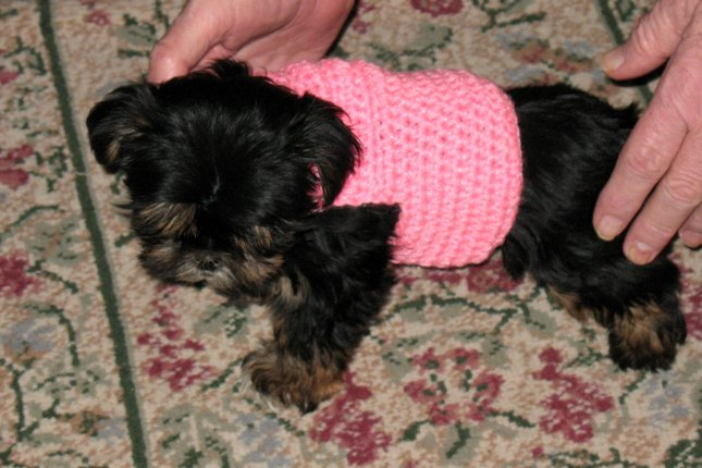 Dog Sweater Crochet Pattern for Small Dogs