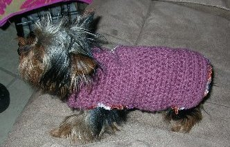 Sweet Pea in her Dog Sweater
