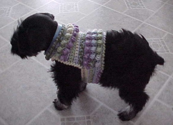 Sawyers Dog Sweater Crochet Pattern Free Crochet Pattern Courtesy